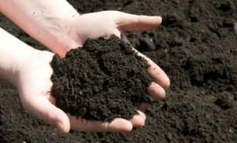 Healthy and fertile soil is necessary for good plant growth