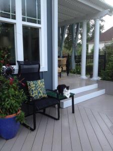 Columbus cat porch